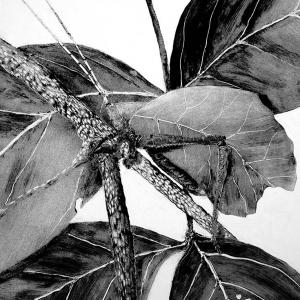 malatsion, Im Regenwald 28-0112, 2011