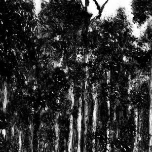 malatsion, Im Regenwald 30-0945, 2014