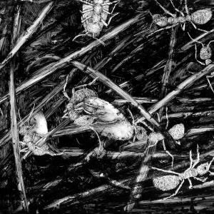 malatsion, Im Regenwald 49-3224, 2011